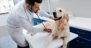 WHY ADMINISTERING CBD OIL TO YOUR DOG CAN HELP THEM LIVE A HEALTHIER LIFE